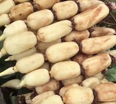 重庆鄂莲7号藕种
