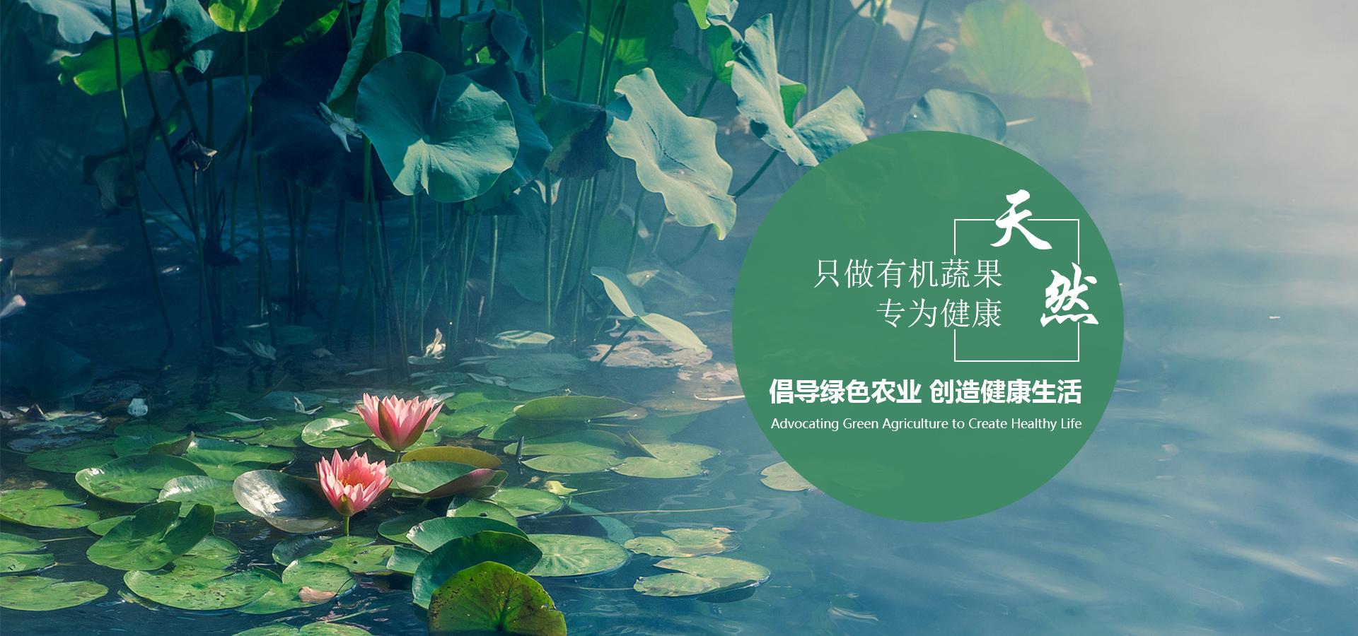 重庆莲藕种植